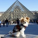 In Paris with your dog