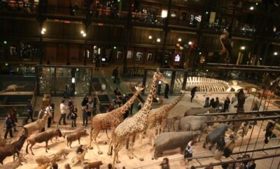 Top Museum for Kids in Paris