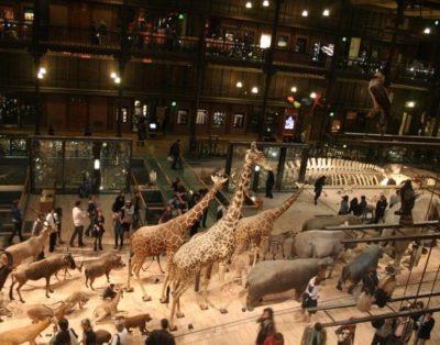 Top Museum for Kids in Paris