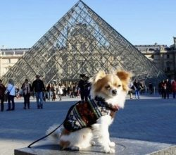 paris with your dog