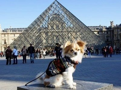 In Paris with your dog, must-knows