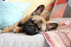 pet-friendly accommodations