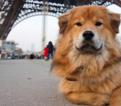 paris dogs