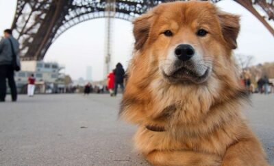 Dogs in Paris, restrictions and services